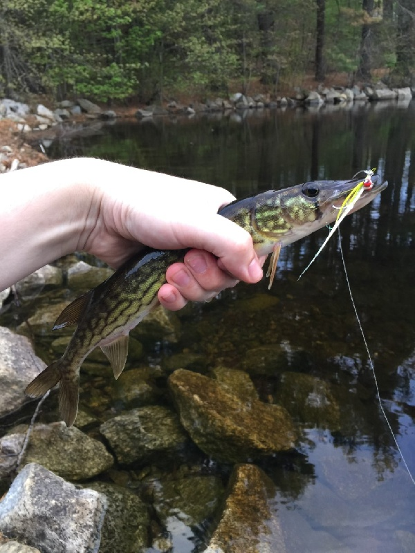 Clouser Pickerel